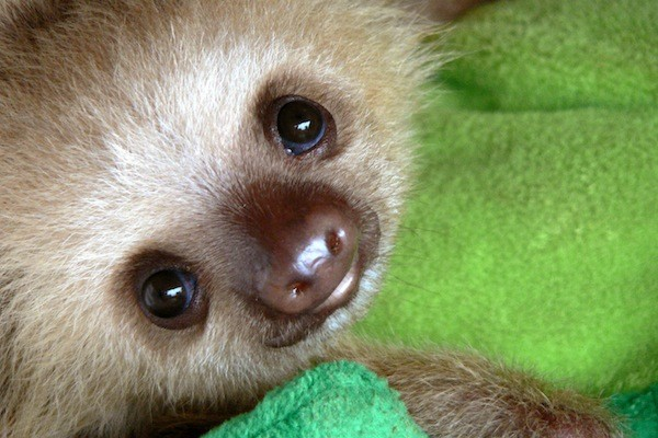 My Baby Sloth