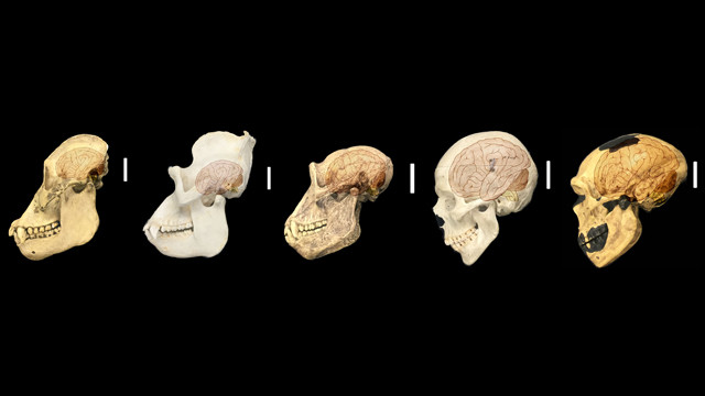 the case for homo neanderthalensis as fully human  part 3 of 6